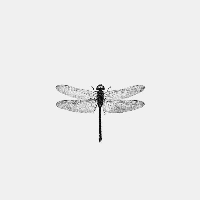 dragonfly_Fer_alcazar.jpg