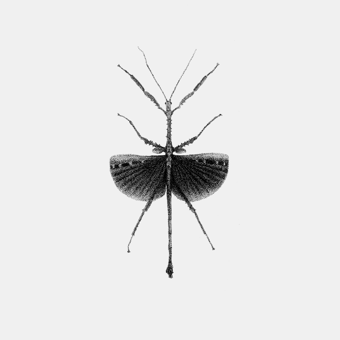 INSECT_20.jpg