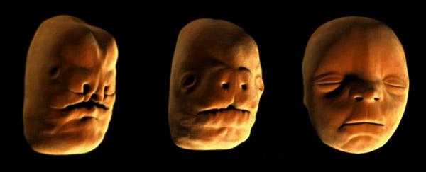 脸部的构造非常独特,是由不同的骨头构造出来的。
