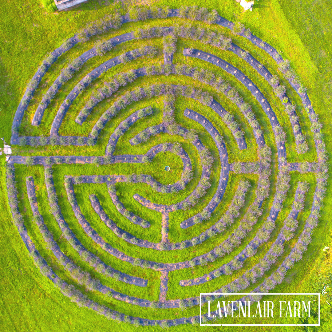Image: A view of the labyrinth at Lavenlair Farm from above.