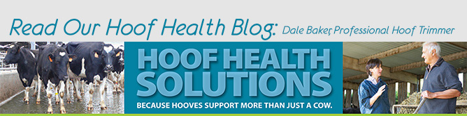 Check out our Hoof Health Solutions blog!