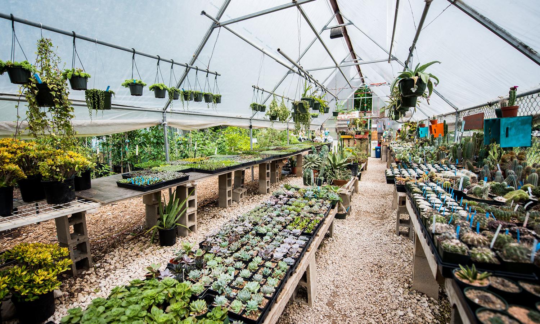 Photo: East Austin Succulents