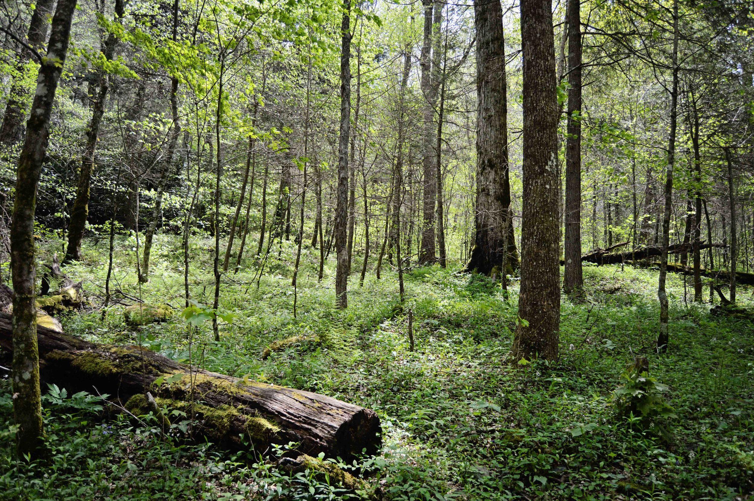 Chimneys_woods.jpg