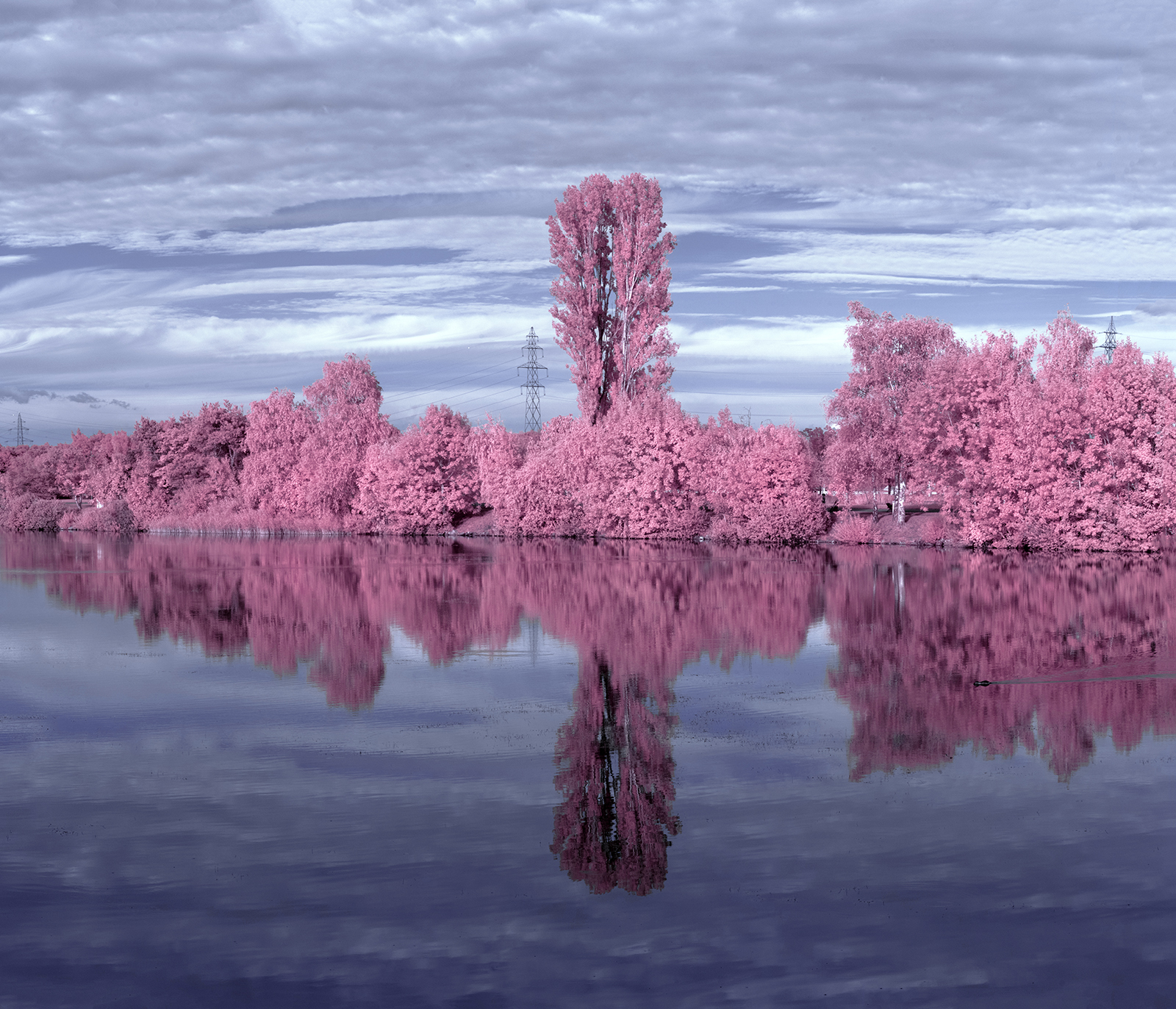 vast tree refelectionpink.jpg