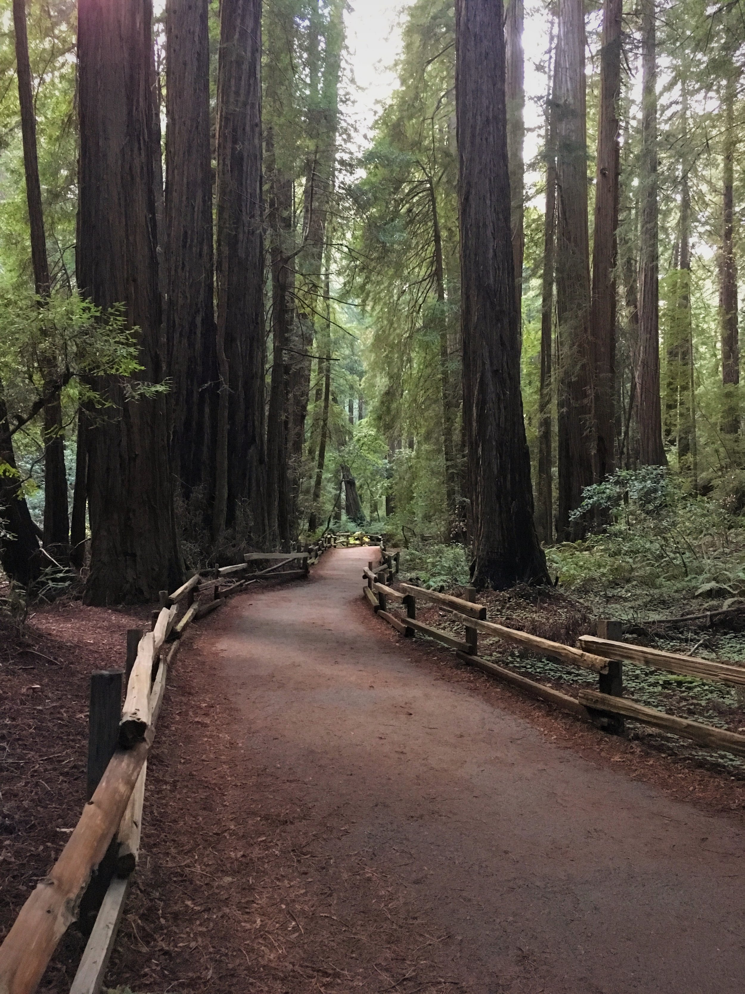 Muir Woods :: Thriving Adventure