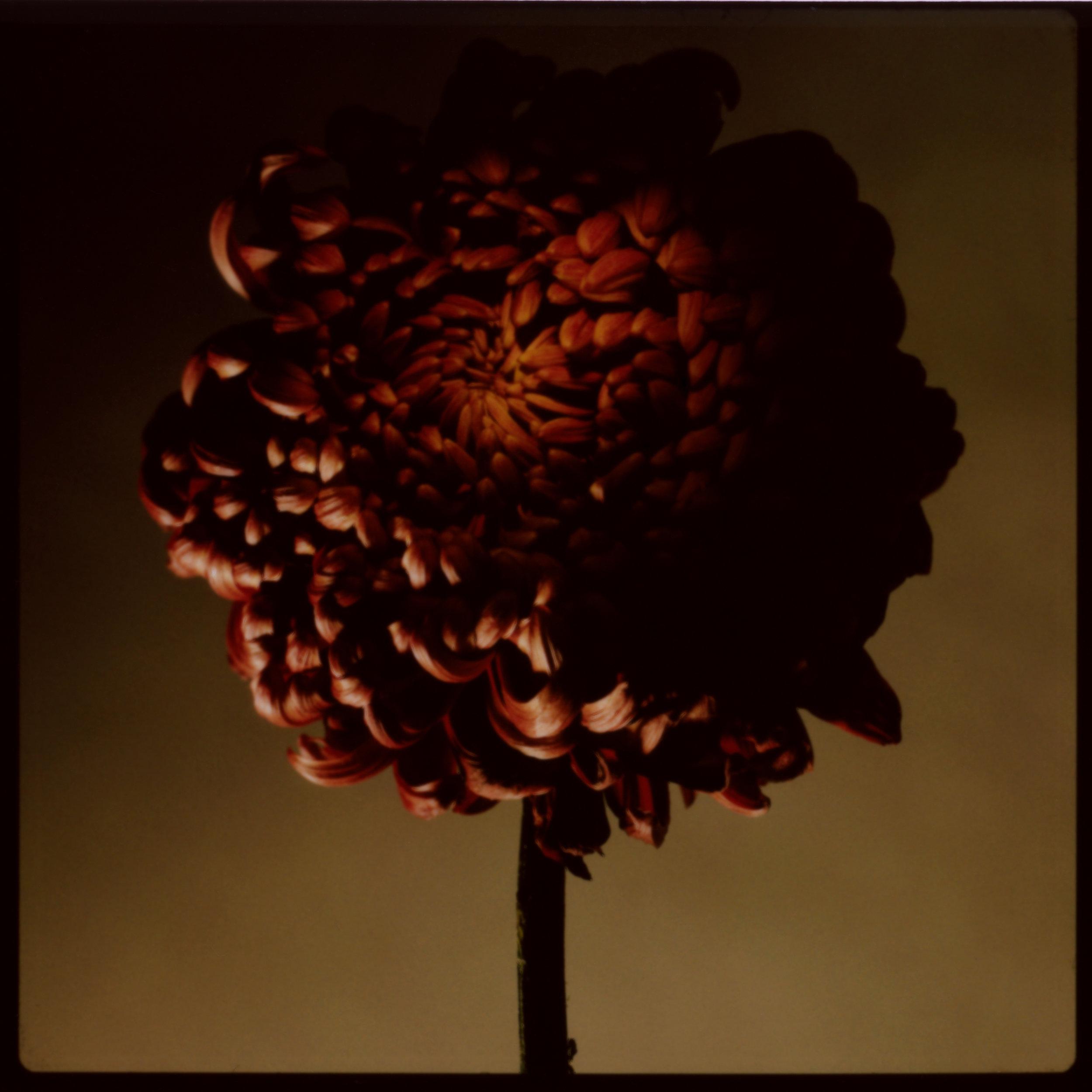 FLOWERS_015.jpg
