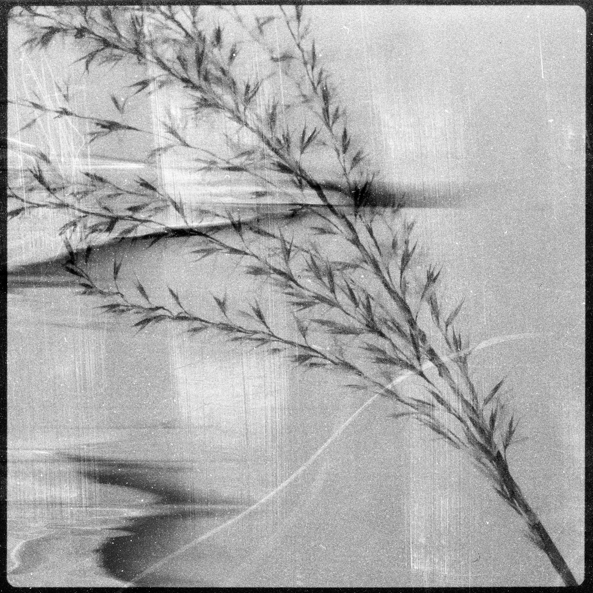 FLOWERS_020.jpg