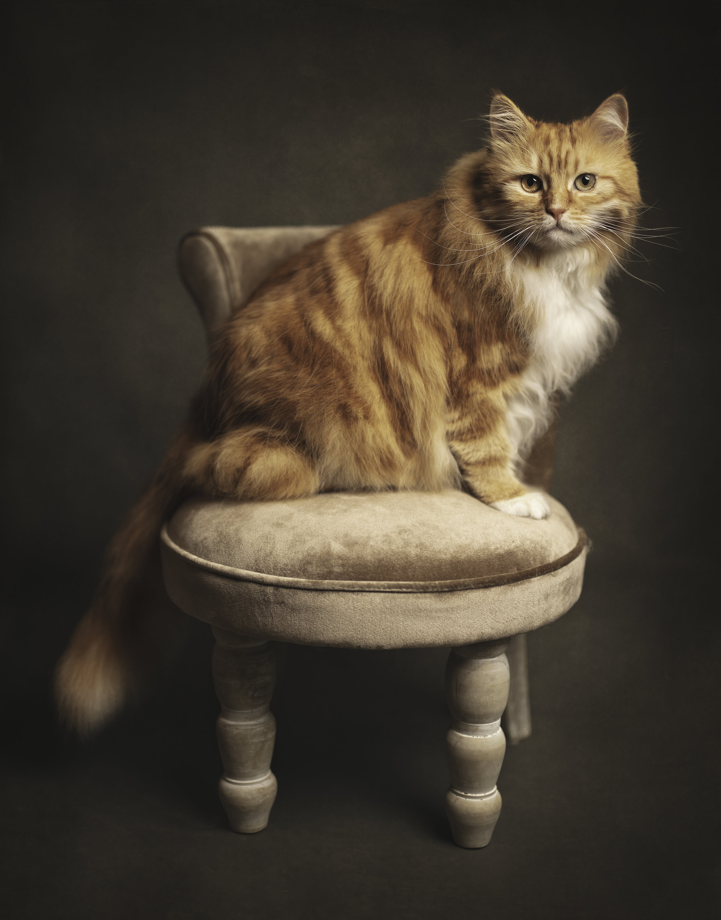 George chair 2.jpg
