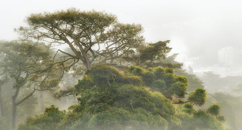 Foggy Strybing Treetops