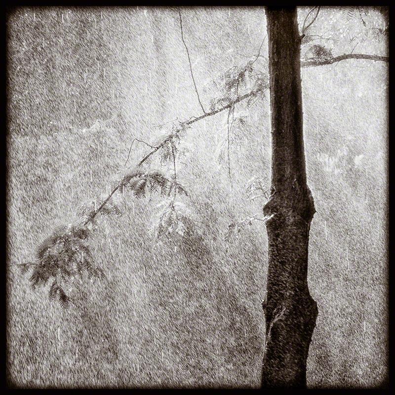 Tree/Sun/Sprinkler #1
