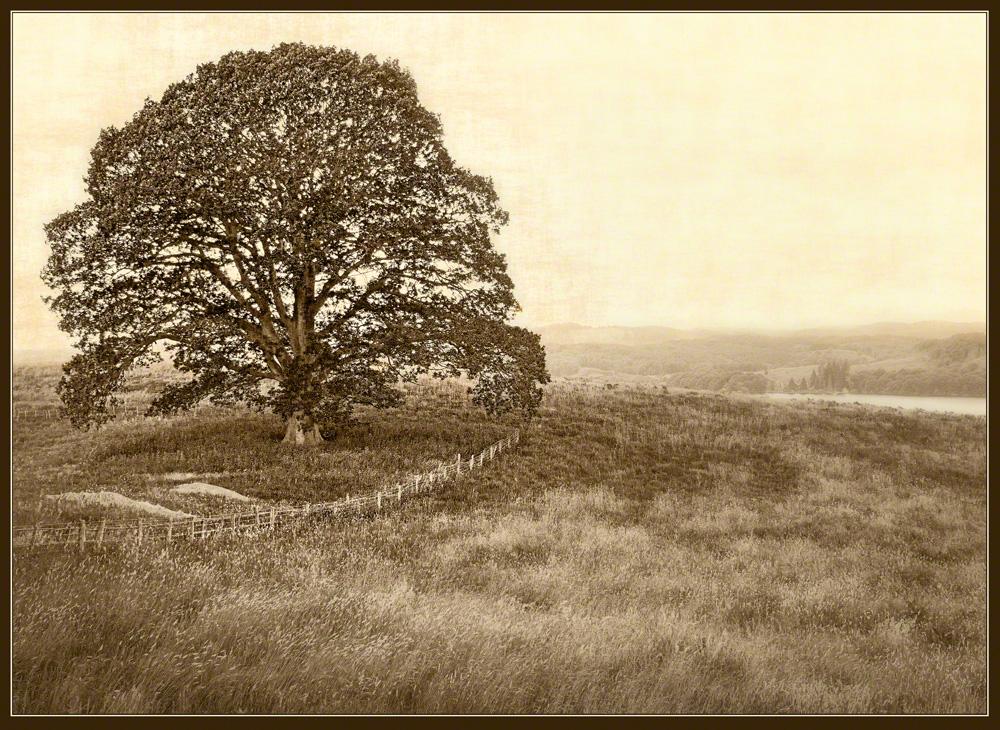 Oak on Bluff