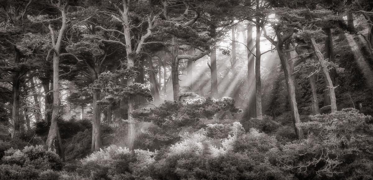 Lightbeams, Strawberry Hill