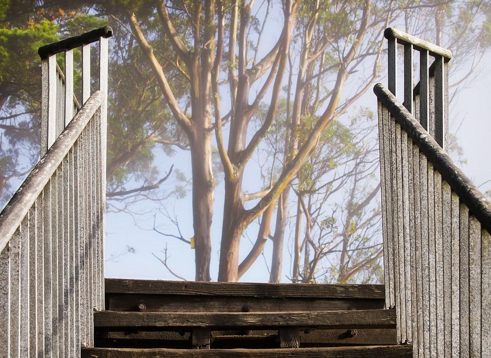 Stairtop Burn-Off, Moraga Hill