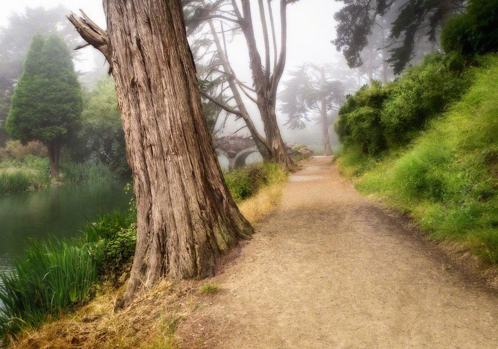Foggy Stow Path