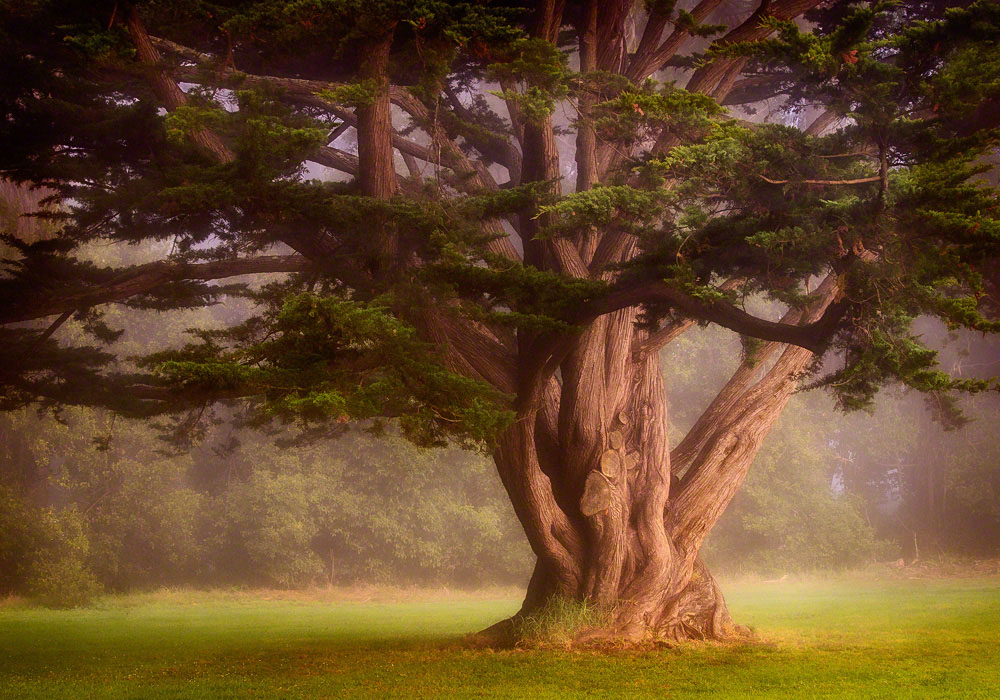 Morning Tree, Near Ballfields