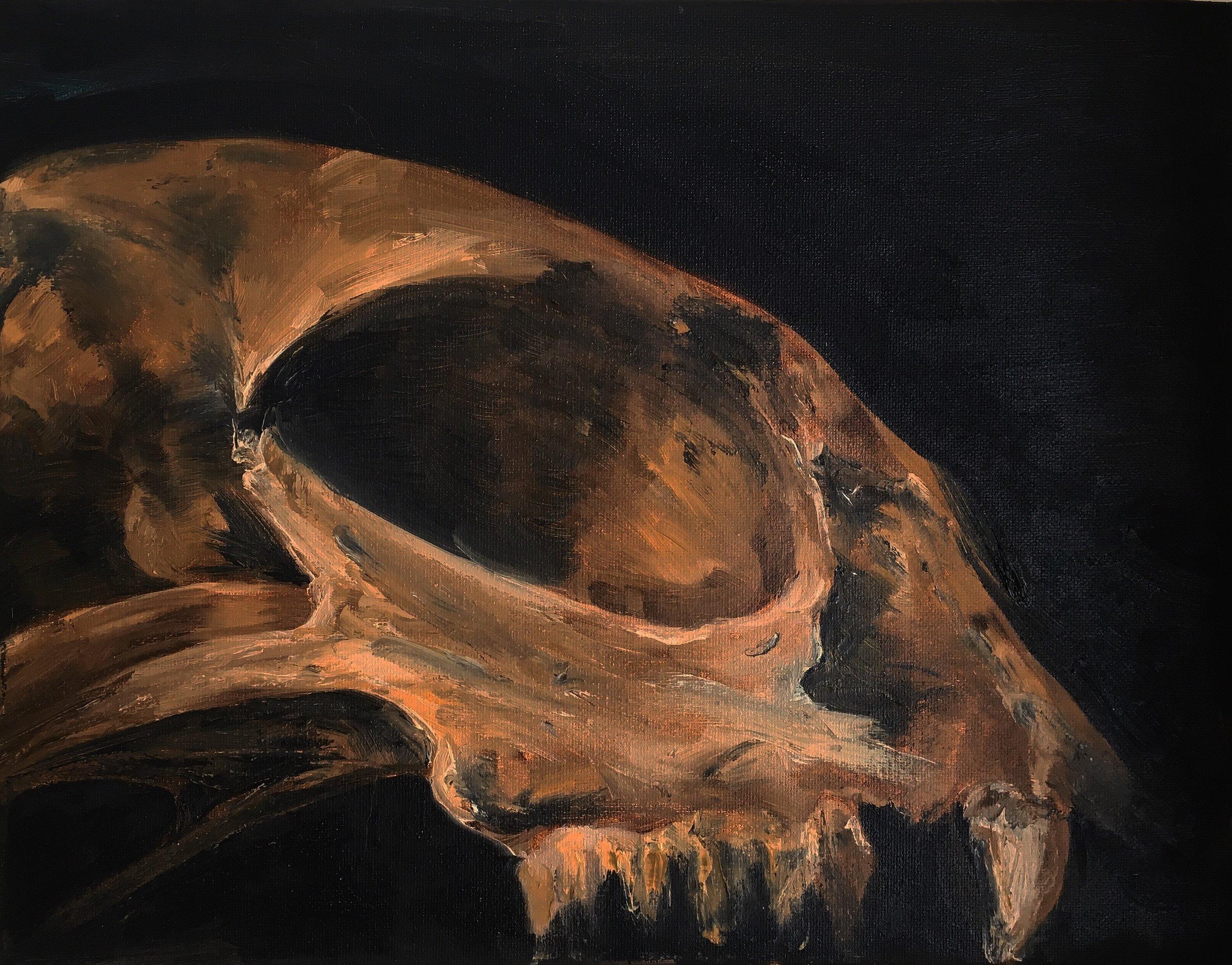 Study of Cat Skull (Oil on Canvas 11x14)