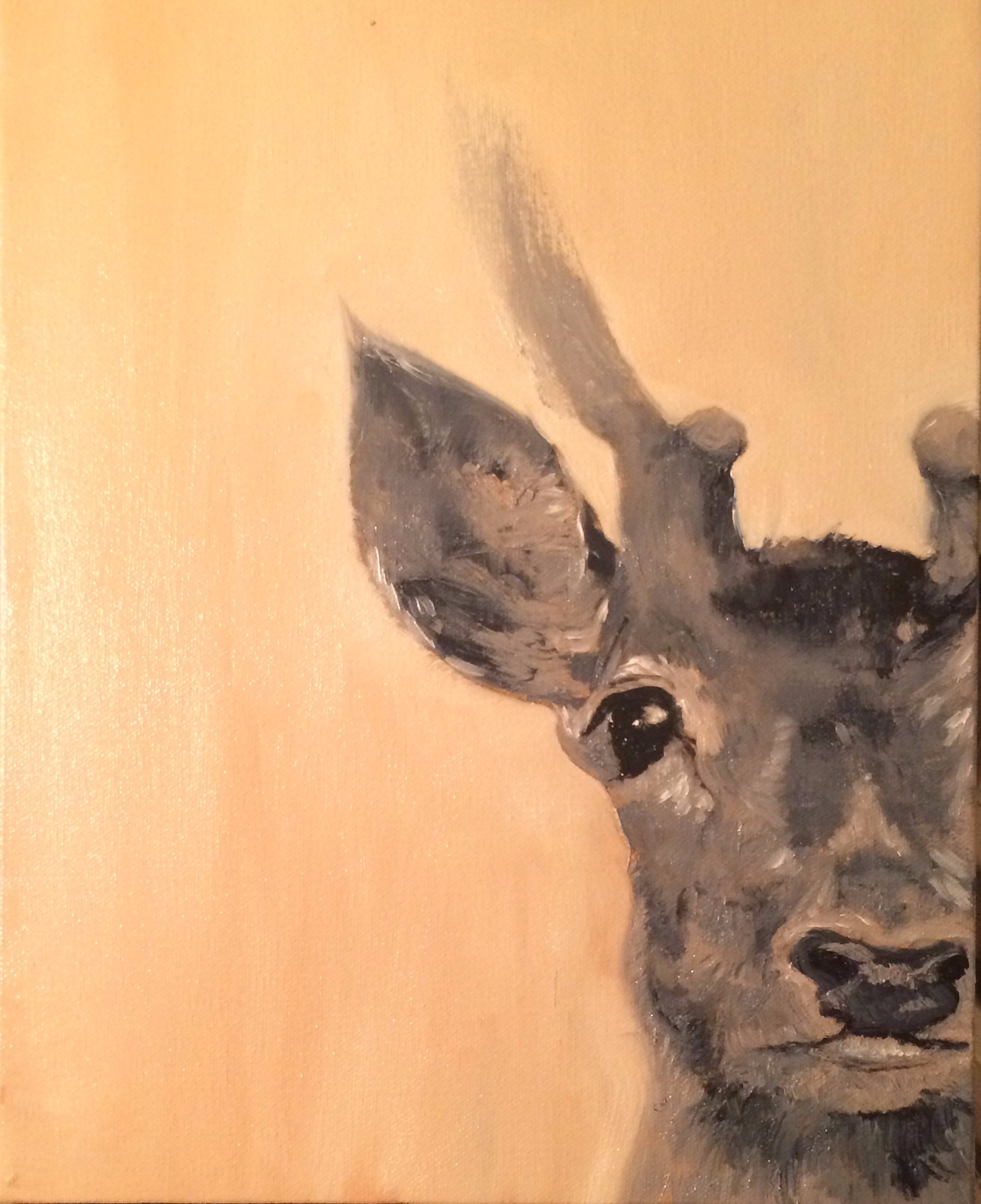Study of Deer (Oil on Canvas 11x14) SOLD