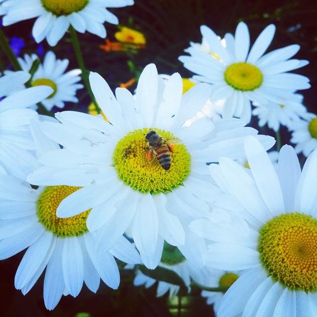 Busy little bee.