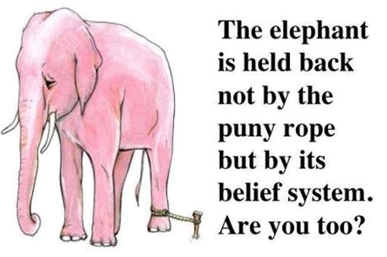 Elephant chained.jpg