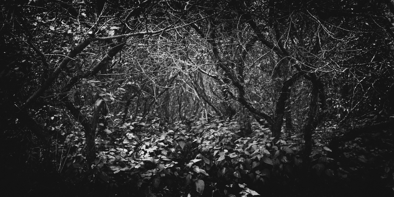 Deep into the woods