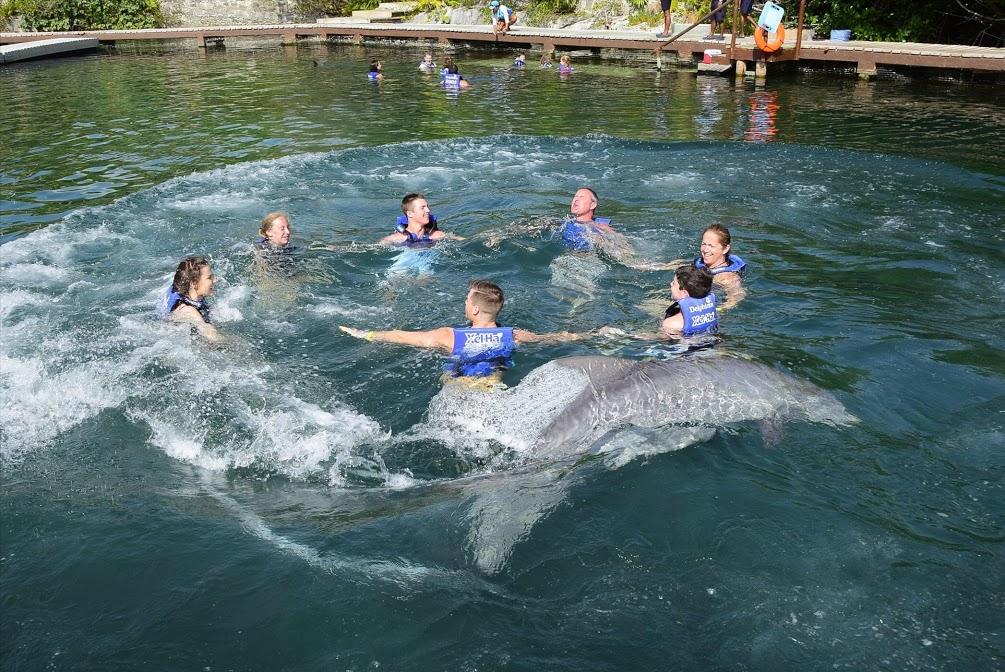 Flynn Xel Ha Dolphins.jpg