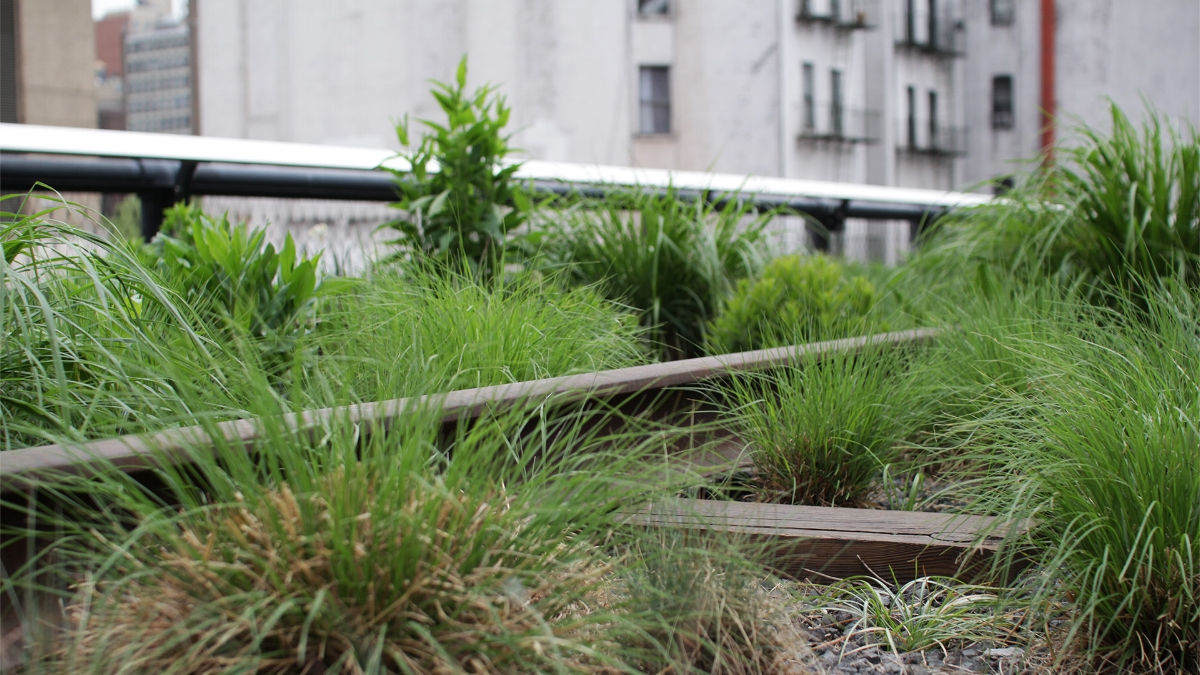 Rail lines mingle with plant life on the High Line.