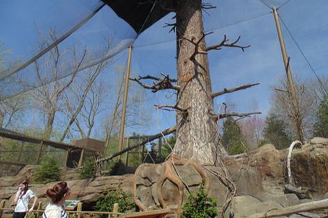 Louisville Zoo Steller's Sea Eagle Aviary