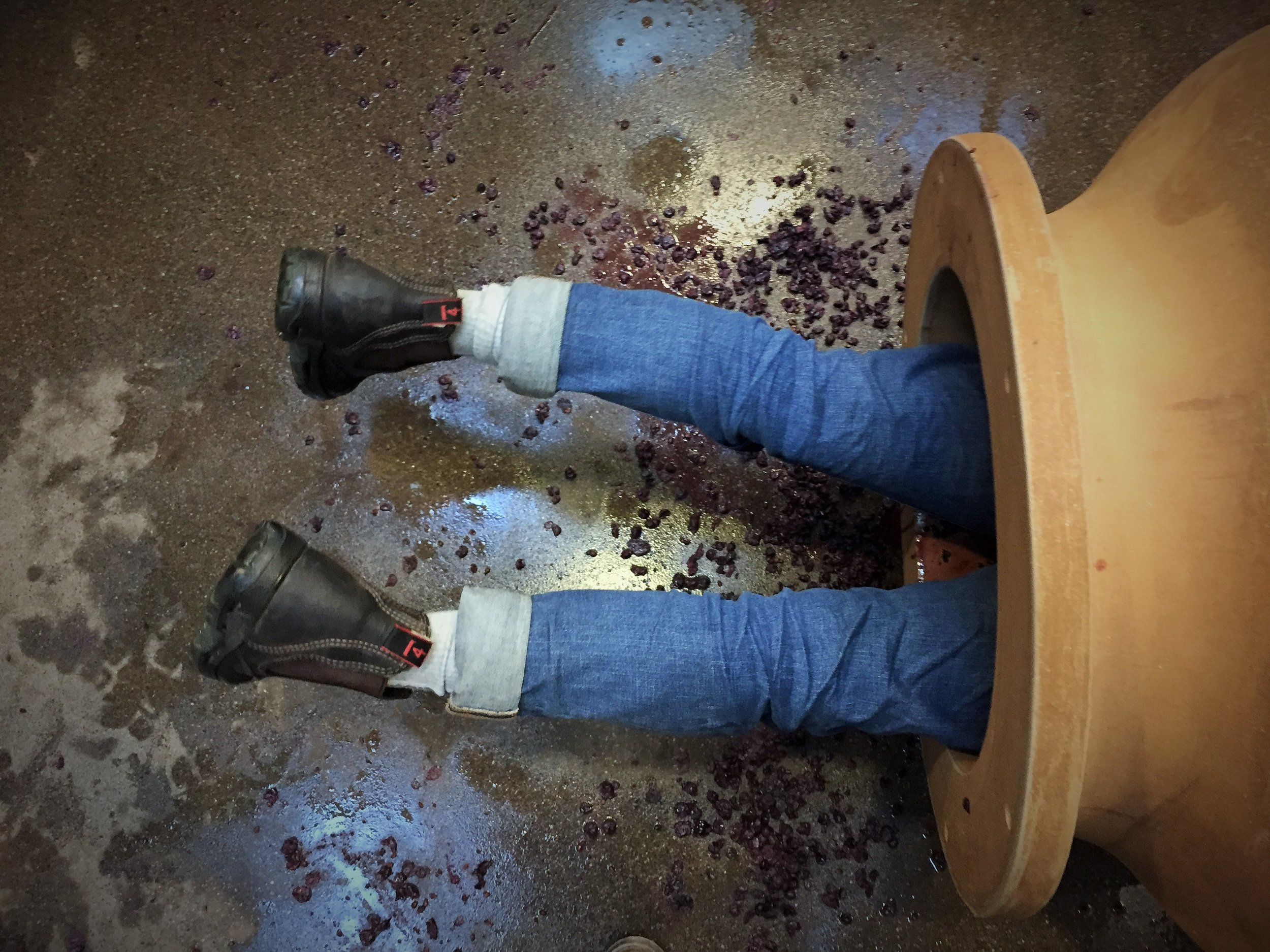 VINFABULA - Wine Stories