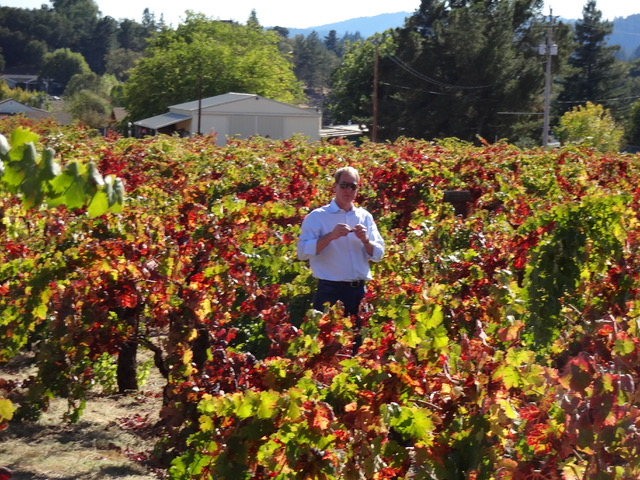 RJ Nowinski in the vineyard days before harvest.