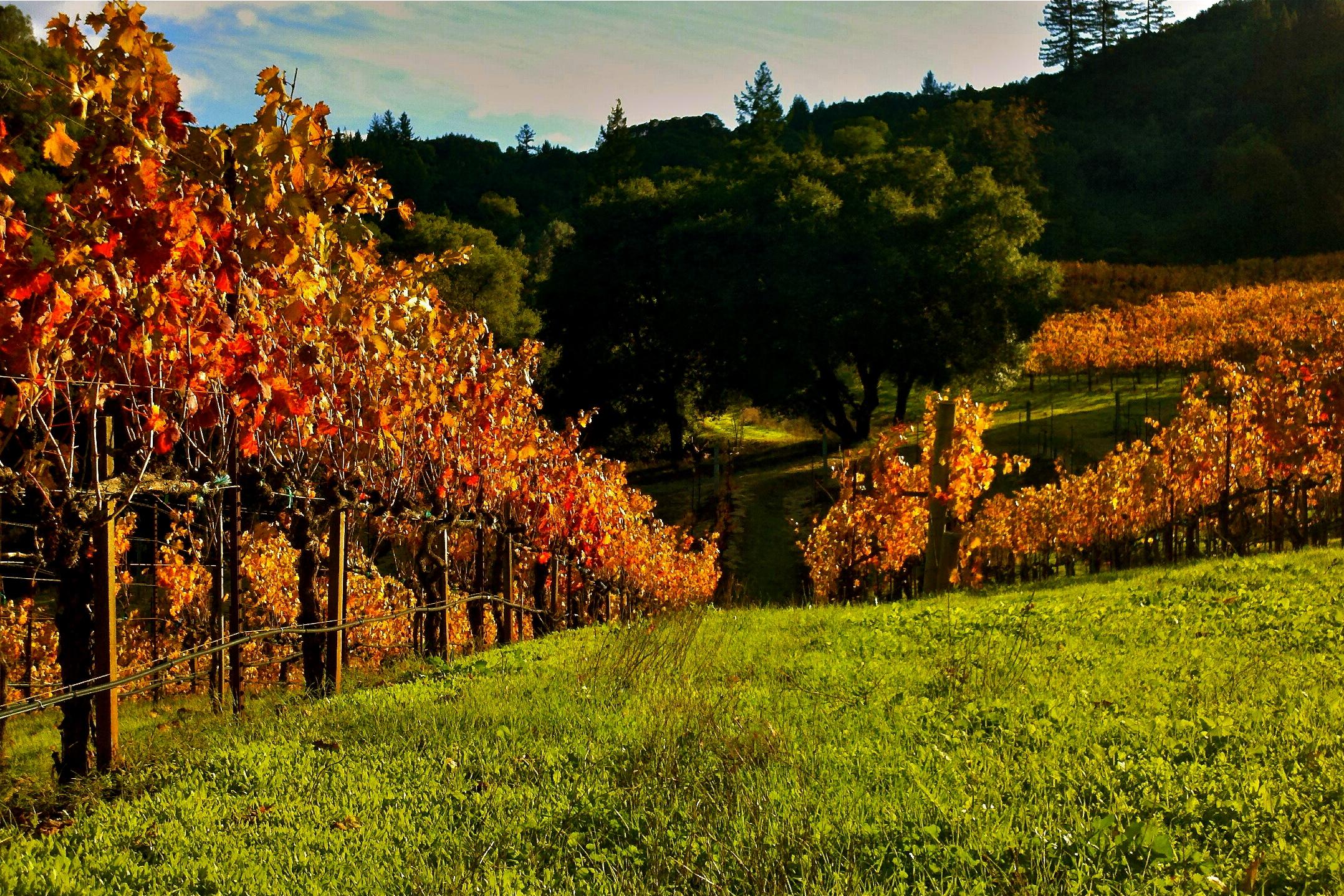 Fall Vineyard.jpg