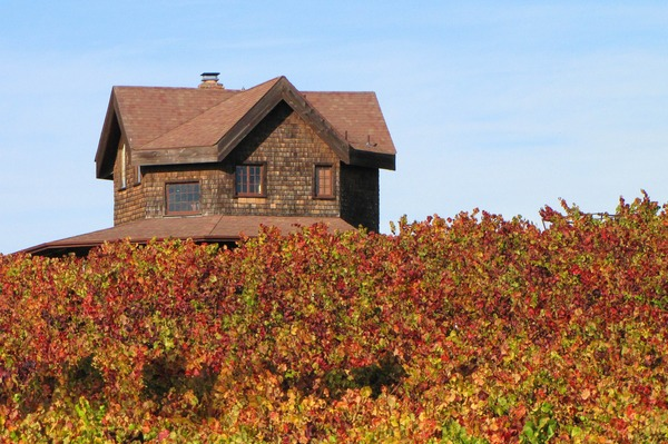 A beautiful posctard picture in Sonoma County by Irene Turner.