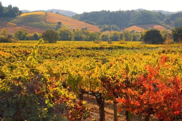A lovely fall scene in Dry Creek Valley from Dry Creek Vineyard.