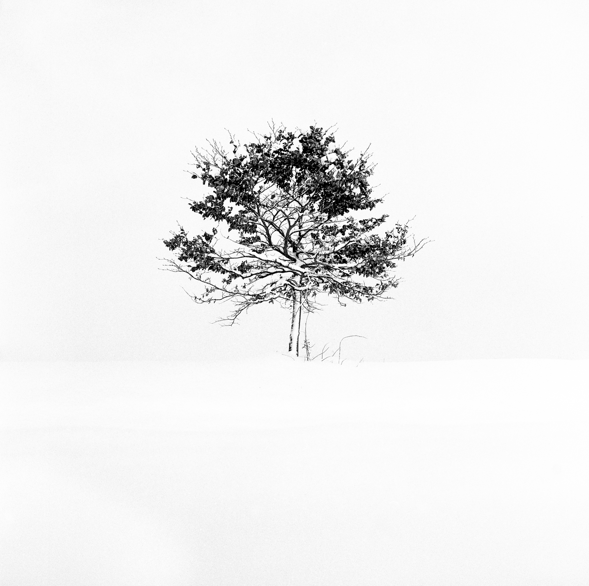 Snow-28006-2.jpg