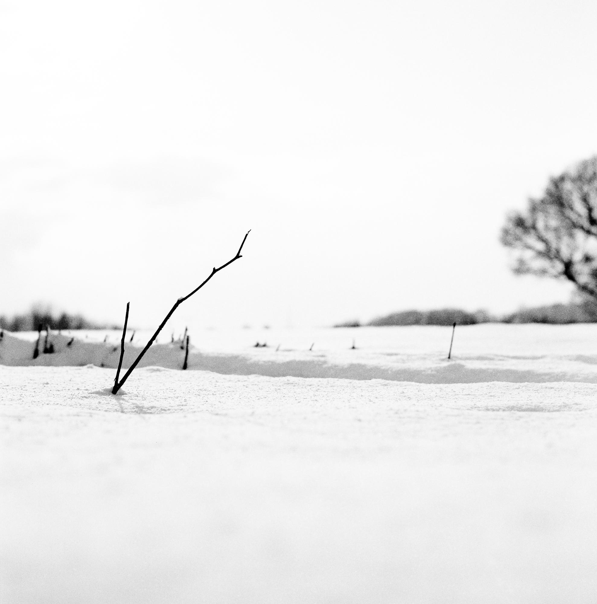 Snow-28004-2.jpg