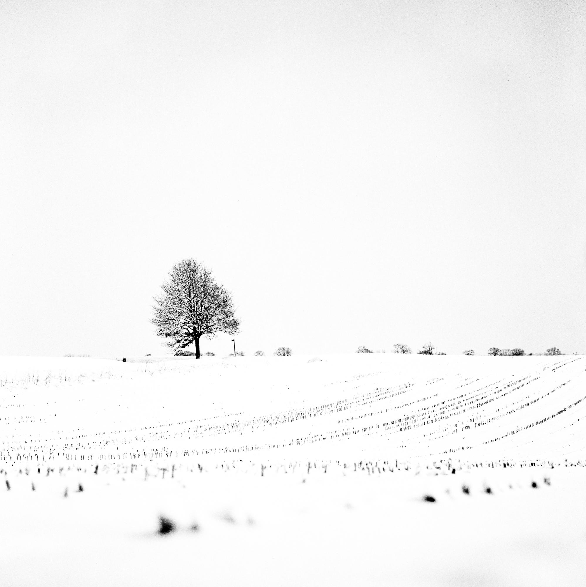 Snow-28008-2.jpg