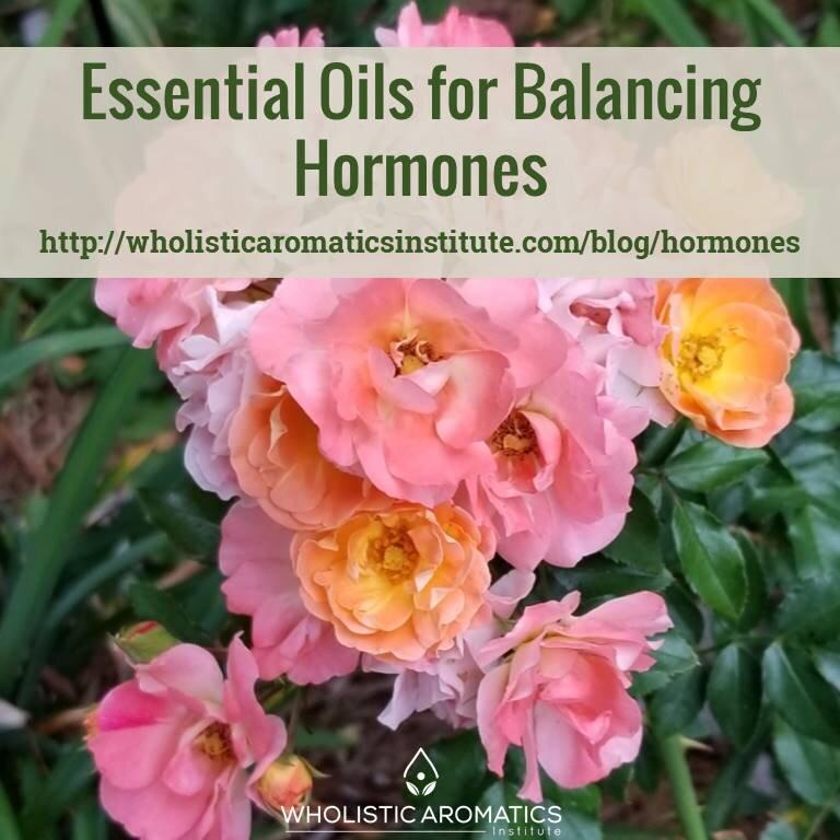 hormones Blog Post.jpg