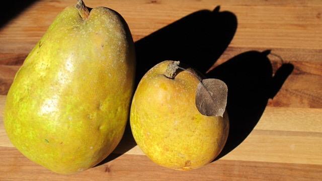 Warren Pears from Frog Hollow Farm