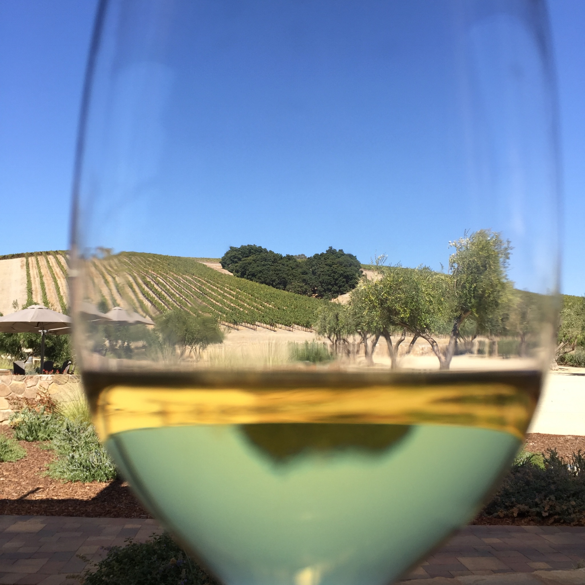 Looking at Heart Hill Vineyard through a glass of Chardonnay during lunch at Niner