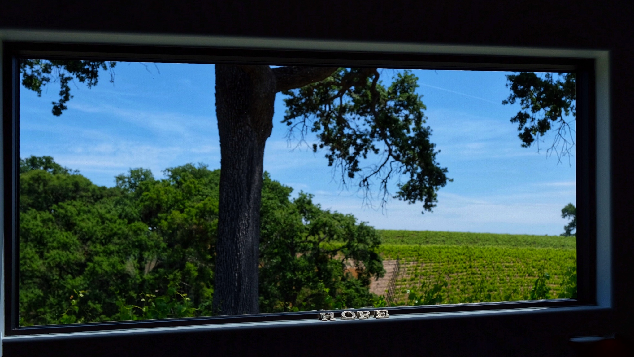View from the tasting room of Austin Hope Winery in Paso Robles, California