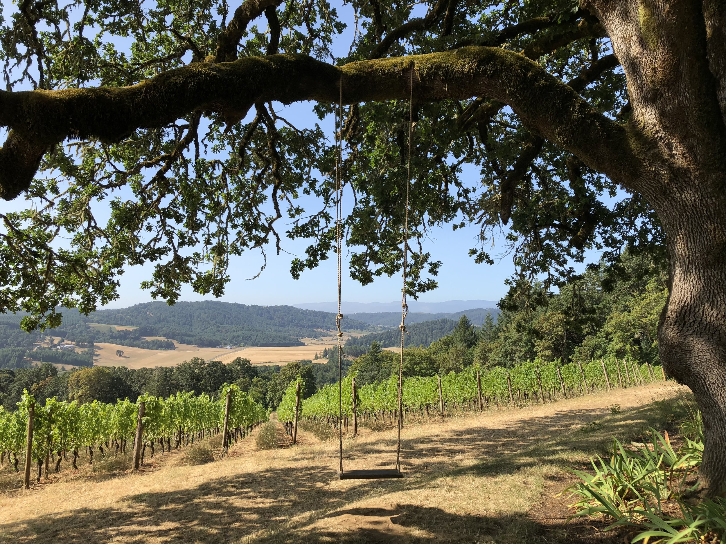 Tree swing over the vines at Youngberg Hill Winery in Willamette Valley, Oregon