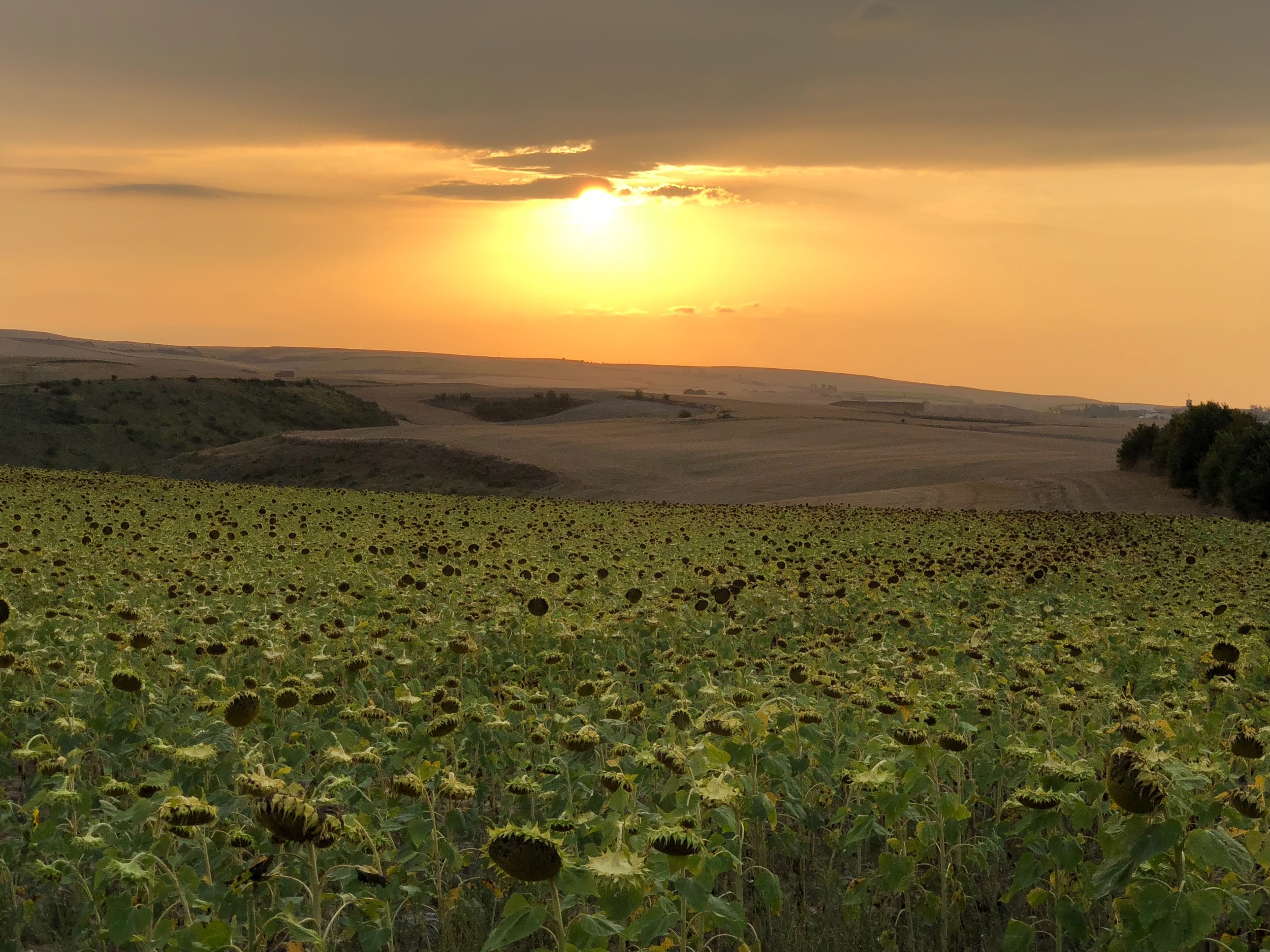Sunset over sunflower fields seen after entering La Rioja on the N-232