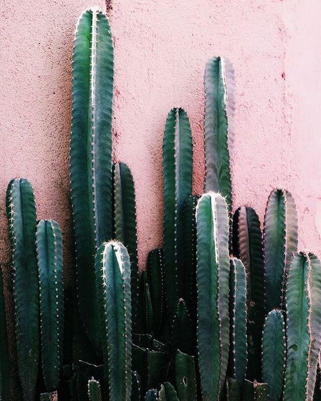 🌵 #inspiration #pinterest #fashion #cactus #colour #ss16 #summer #graduatecollection #printdesigner #design #travel #instagood #womenswear #passion #instalike #emergingdesigner #comingsoon #staytuned