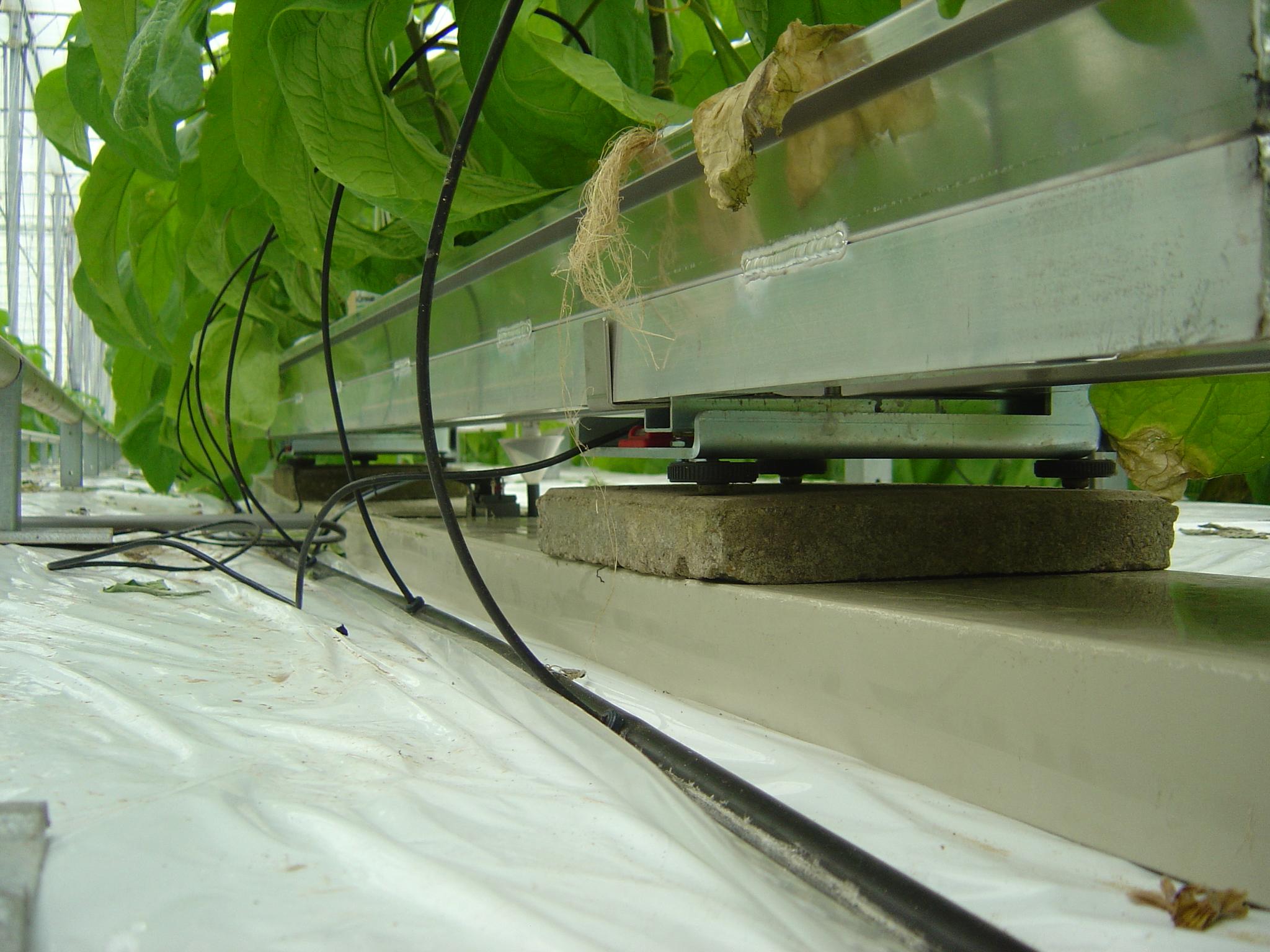 PRIVA Root Optimizer - Zawsze poszukujesz sposobów, dzięki którym możesz się jeszcze bardziej rozwijać. Inteligentna uprawa jest możliwa tylko wtedy, gdy sama roślina może wpływać na podlewanie, ponieważ im precyzyjniejsze podlewanie, tym zdrowszy system korzeniowy; następnie produkcja wzrasta w wyniku lepszego wchłaniania składników odżywczych przez system korzeniowy.