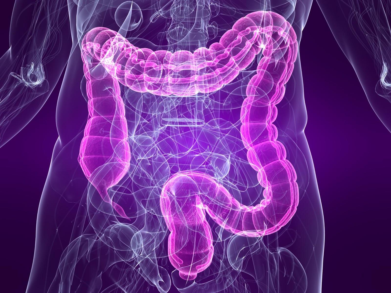 mix_bowel-diagram.jpg