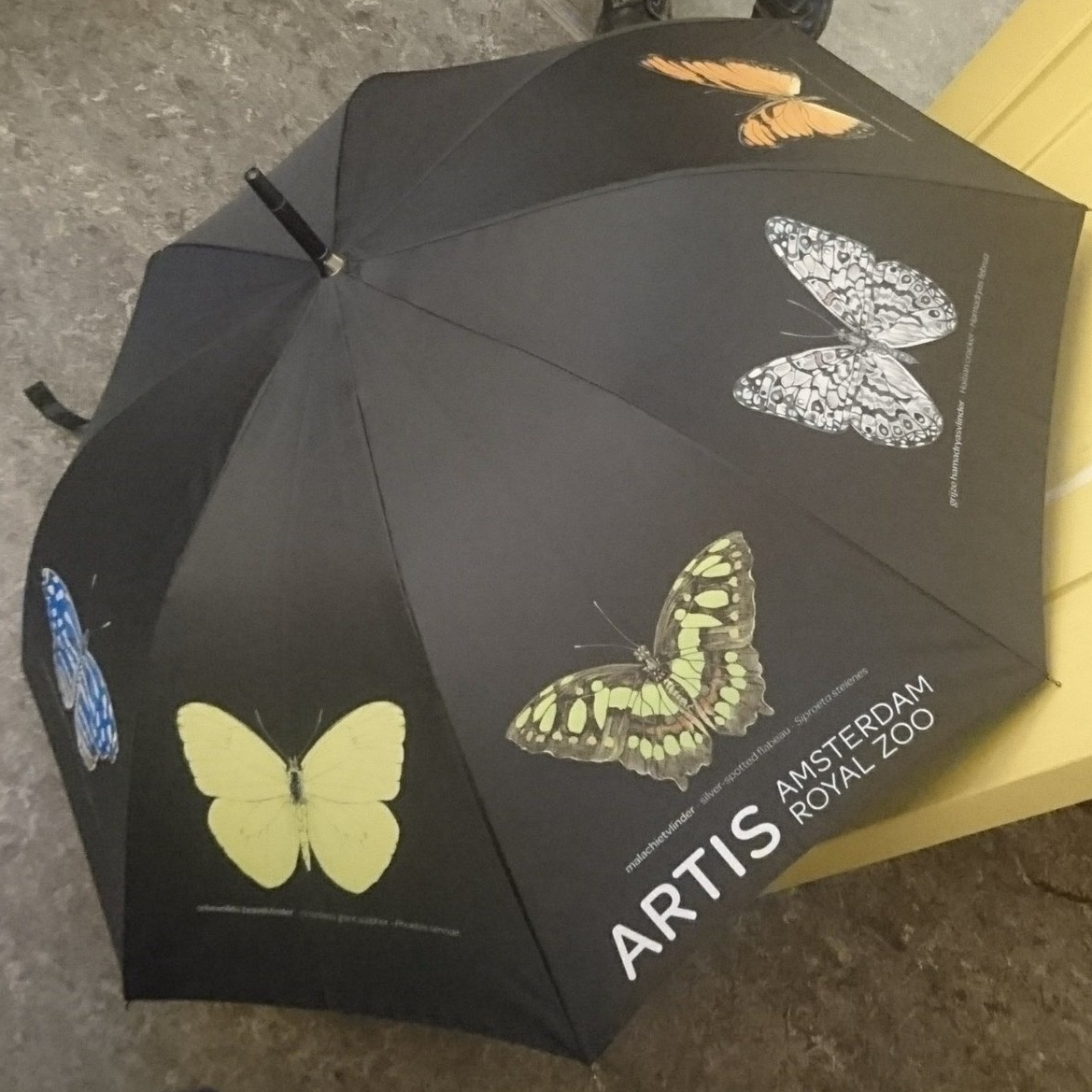 Umbrella for the shop