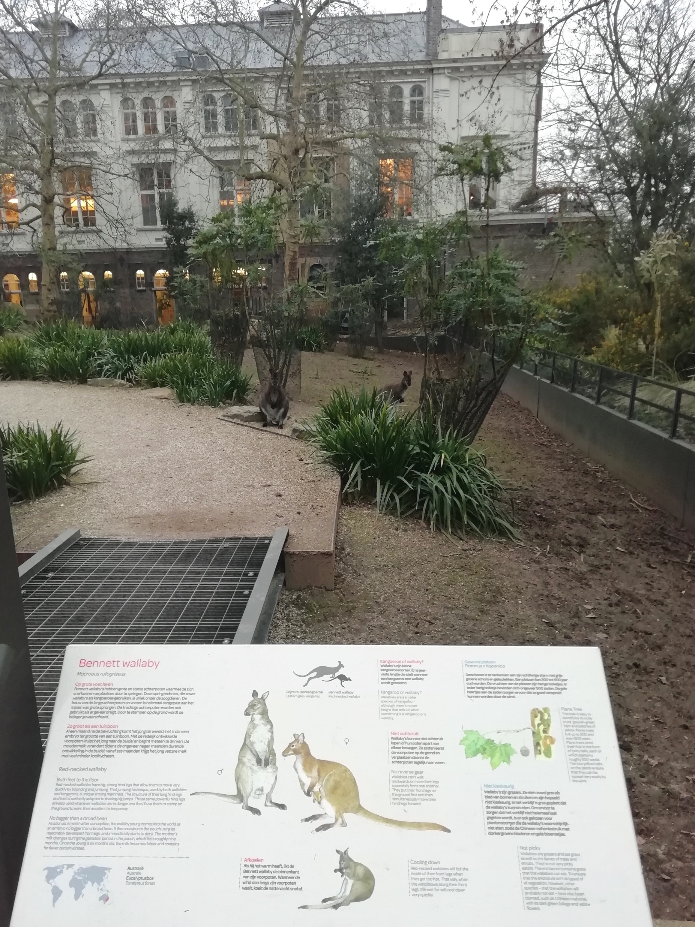 Information sign on the Bennett Wallabies