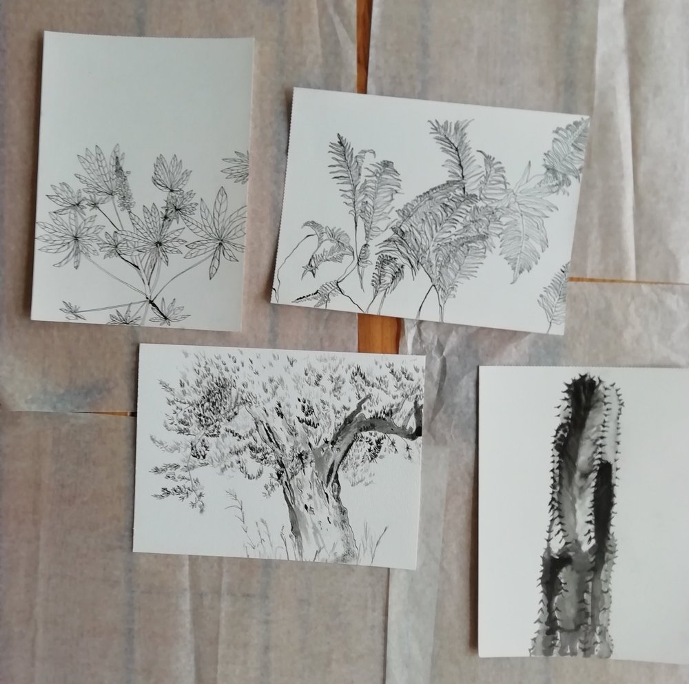A set of 8 commissioned botanical illustration drawn in the botanical garden of the VU in Amsterdam, 5-8