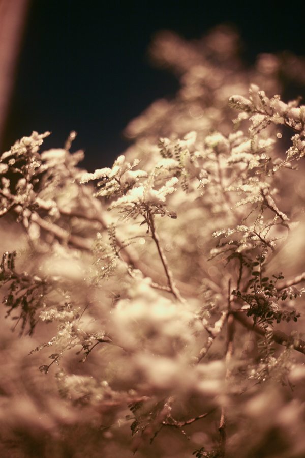 frost-3.jpg