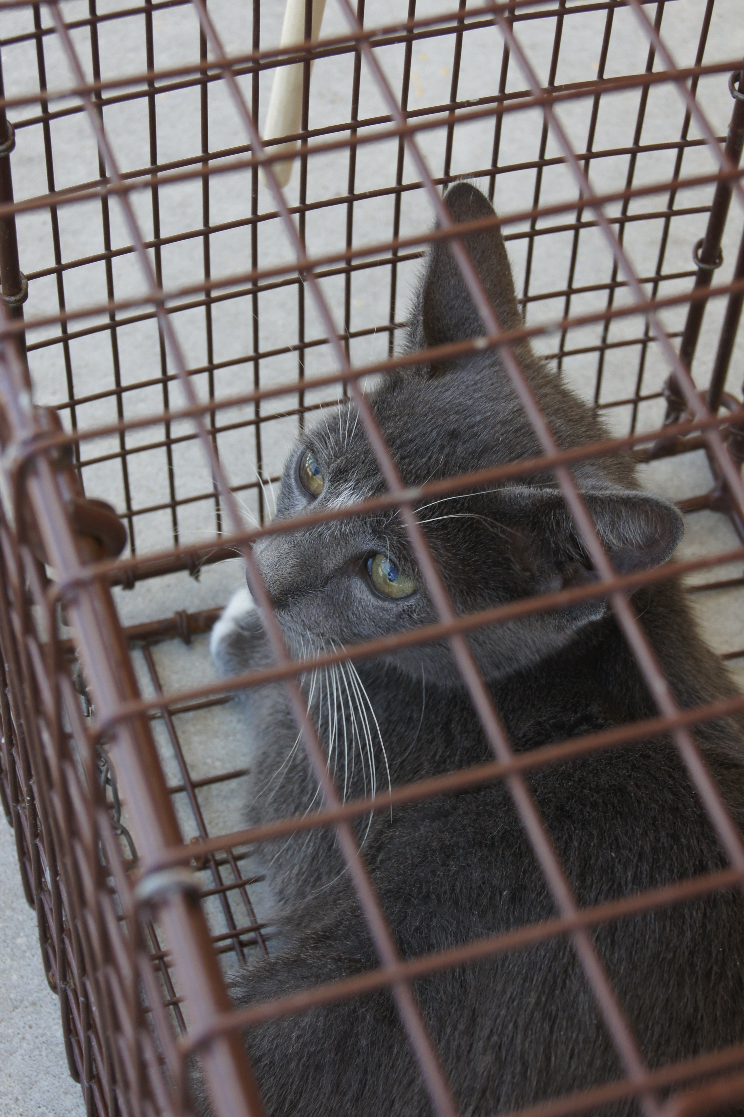 Trap-Neuter-Return (TNR)  is a humane, cost-effective way to decrease the population of feral and stray cats within a community.