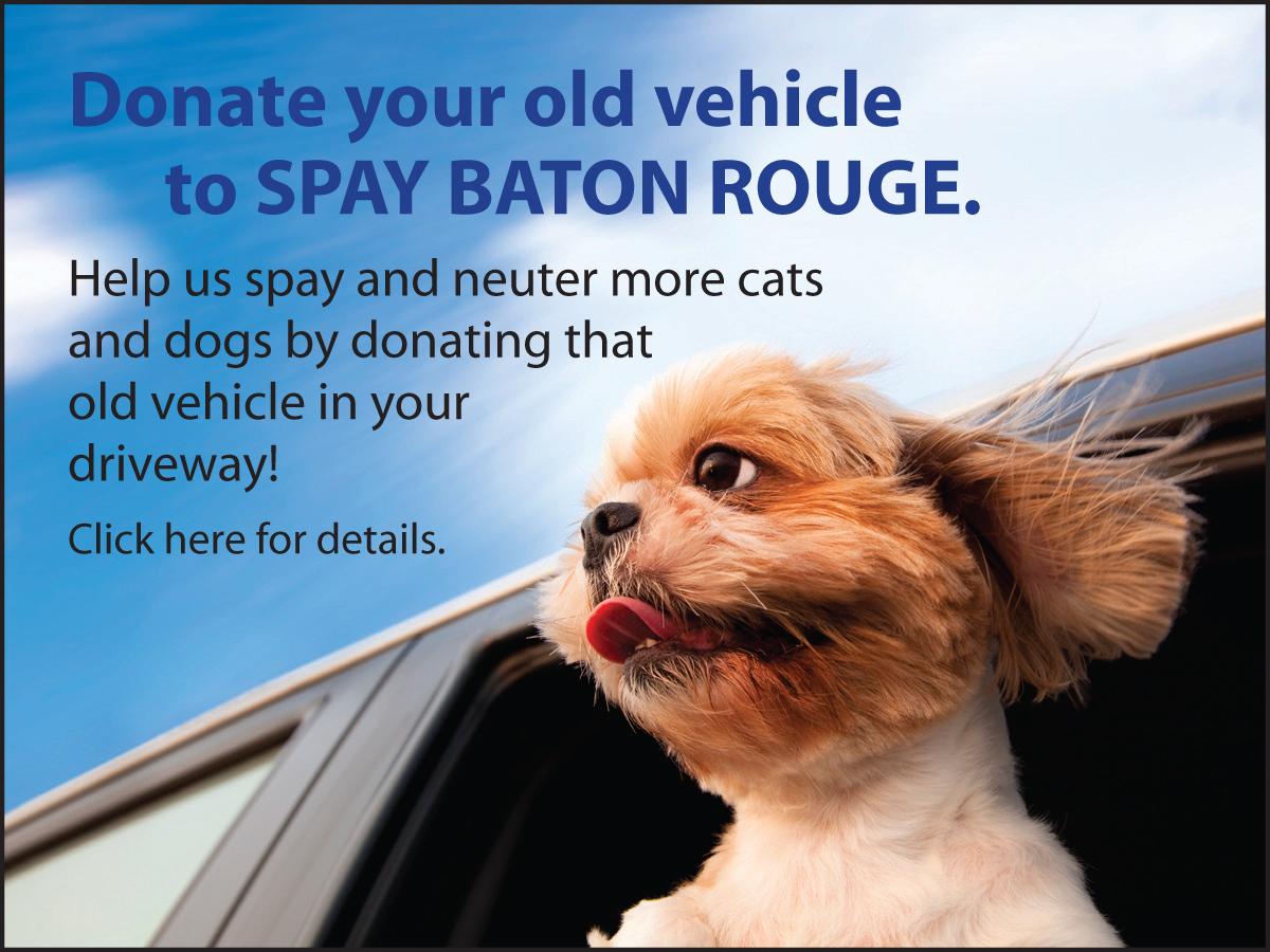 Everyday_Donate Vehicle.jpg